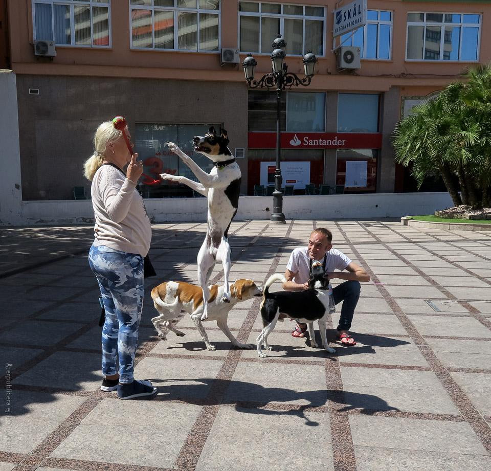 Inskickad bild: hoppande hund