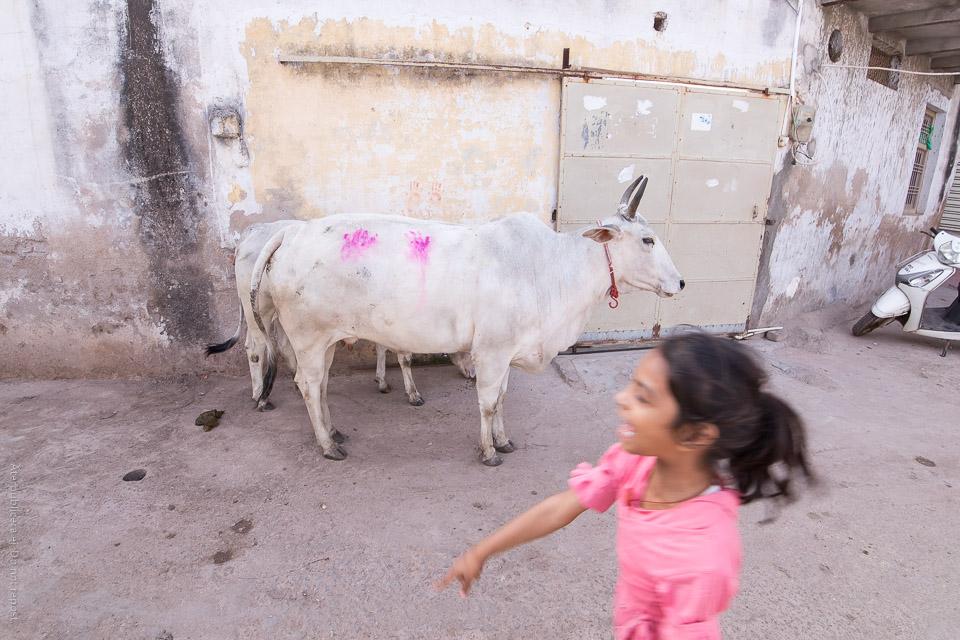 Handavtryck på ko