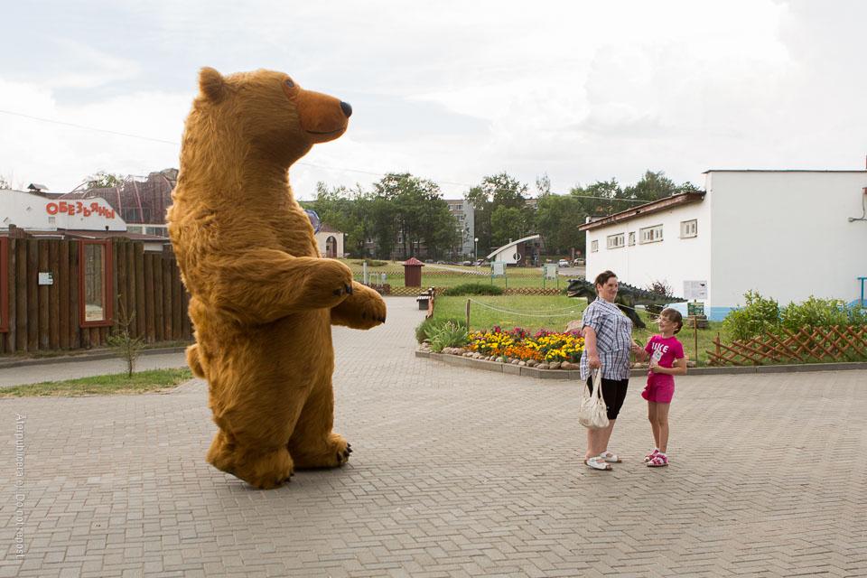Björn i blåst
