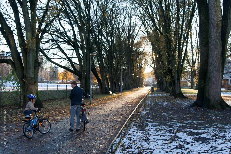 Cyklister i allé