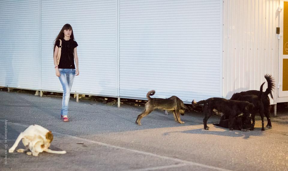 Flicka och hundar