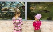 Barn vid akvarier